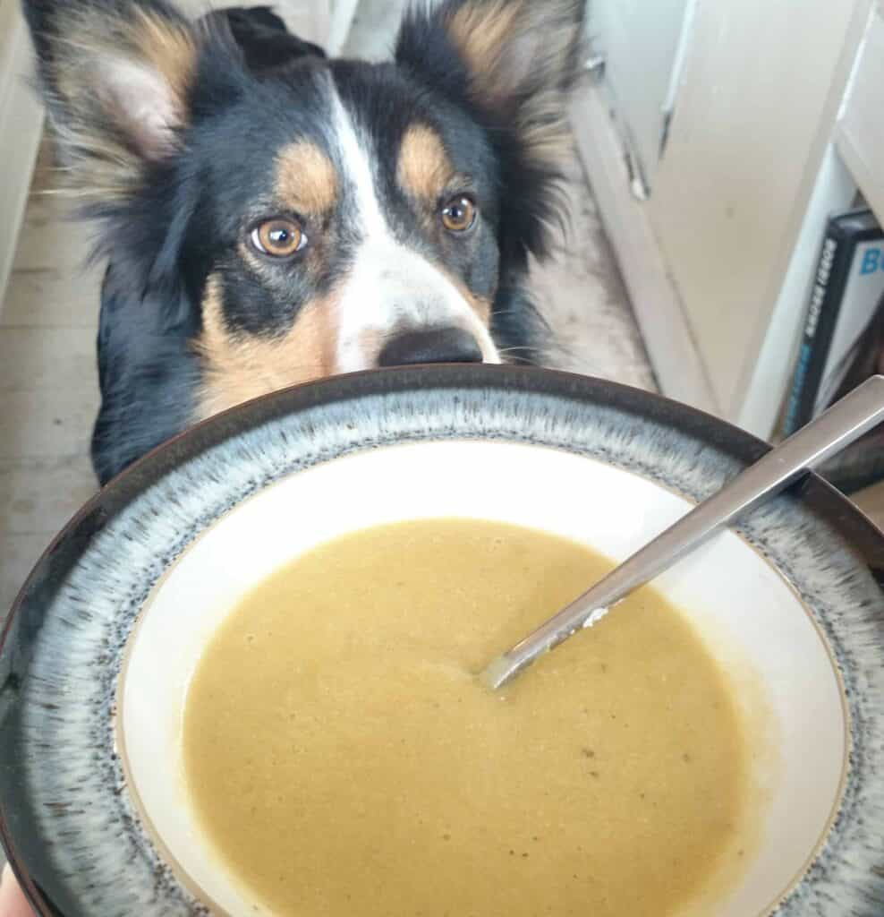 Slimming World Syn Free Cream of Chicken Soup Maker Recipe