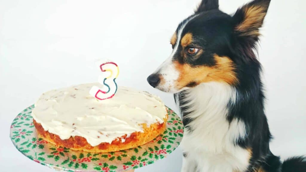 Birthday Cake Recipe for Dogs