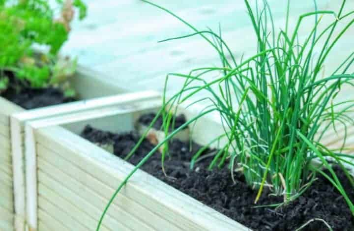 The Herb Kitchen Garden & DIY Lounge Decking